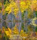 U.P.Lake 3-207533