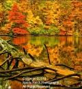 Lake Arthur Log-204008