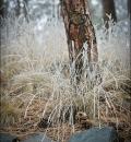 Frosty Grass-204077