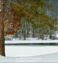 North Park Lake-204104