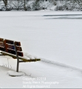 North Park Bench-204107
