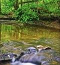 Hell's Hollow, Slippery Rock Creek-204495