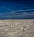 Ed's Dune Grass-205556