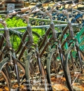 Lots-a-bikes-204398
